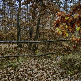 Последните есенни щрихи