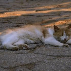 Котешки комфорт