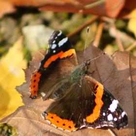 Пеперуда по никое време