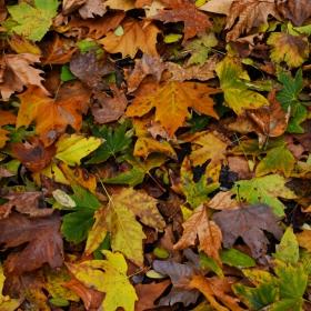 Есенна палитра..