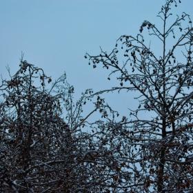 Снежен Пловдив макар и за кратко