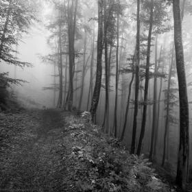 Из мъгливостите на Октомври