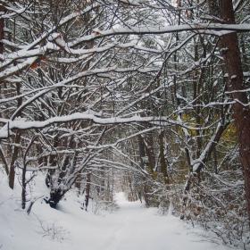 Зимна гора 2