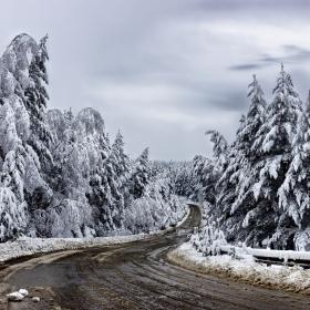 Последният сняг