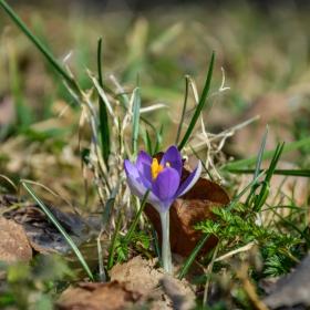 Пролетта наближава