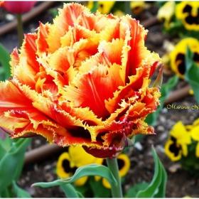 Цветна пролет