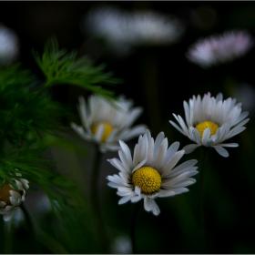 Из цветната градина