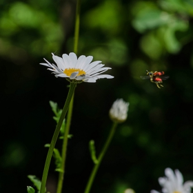 Летящо насекомо