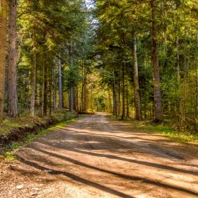 Пътя за хижа Яворов