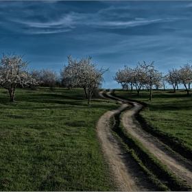 Пътят към черешовата горичка