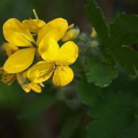 yellow passion-2