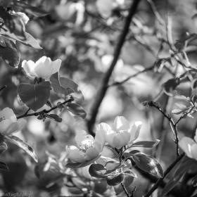 Крушова пролет