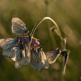 Пеперуди късен слетобяд