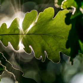 слънцето в листата