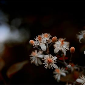 Странните цветове на градината