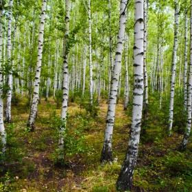 Разходка в гората