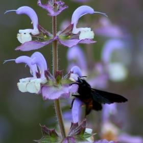 Бръмбар на цвете