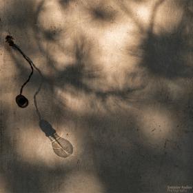Крушка и светлина