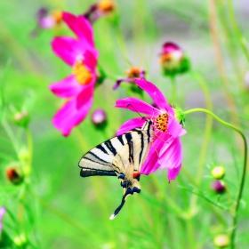 Пеперуда и цвете