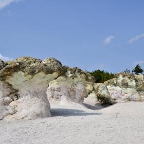 Скалните гъби