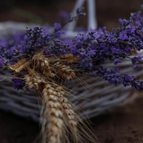 Лавандула и жито