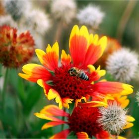 Градински цветя и пчеличка