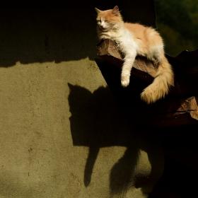 Котешки живот