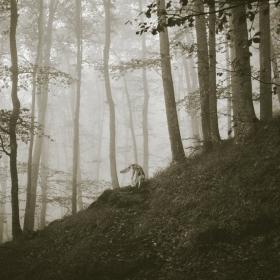 Мъглива разходка из Родопите