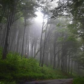 Омагьосаната гора преди Бузлуджа..
