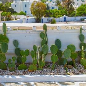 Кактусова градинка