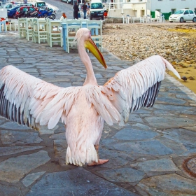 Пеликанът Петър 2