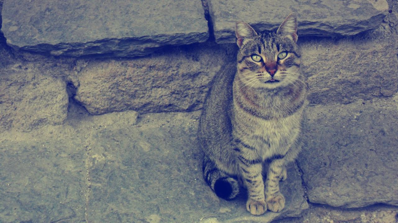Ретро коте