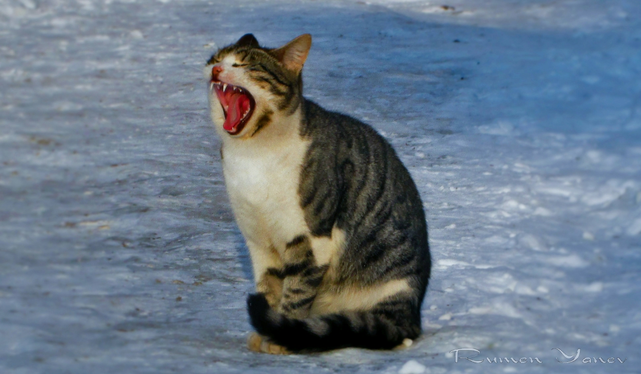 Бог е създал котката за това, че при човек да има тигър, който да може да погали. - Виктор Юго