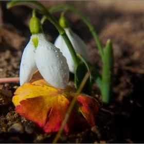 Пролетни предвестници