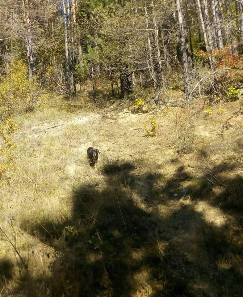 Кученце в гората