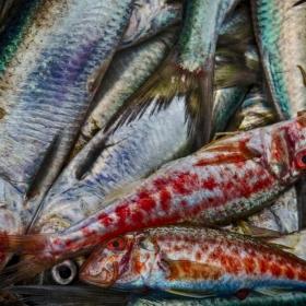 Пъстър улов