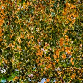 Есенна мозайка