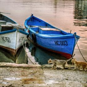 В очакване на рибарите