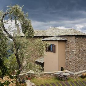 Край старата маслина