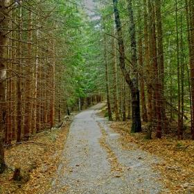 Пътеката към Кумата