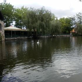 Лебед