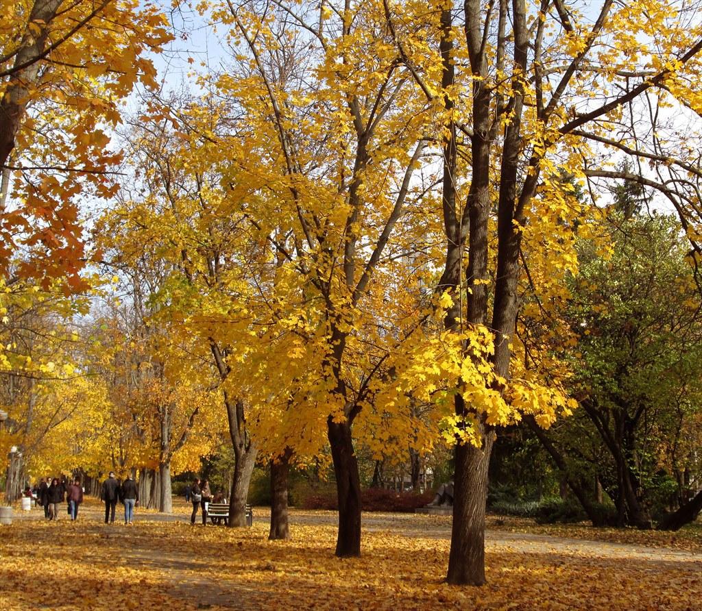 Шшшт... Есента рисува...