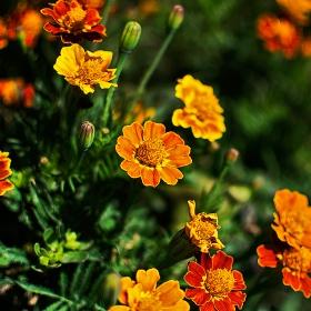 Цветенца някакви