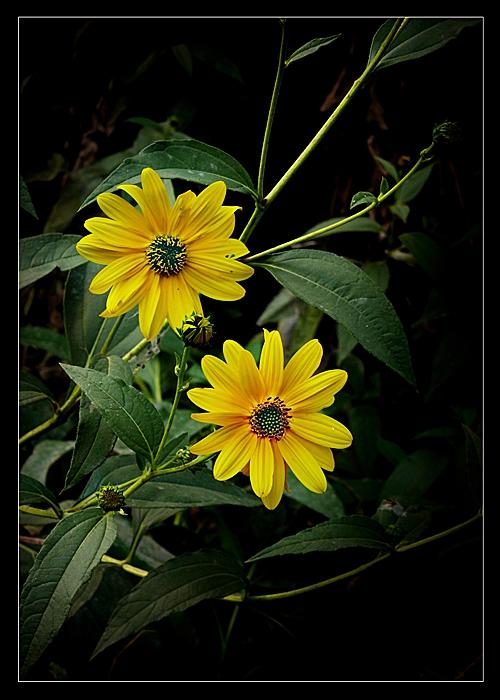 Есенно и жълтичко