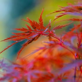 Червеният октомври