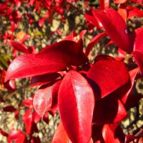 Есен в червено
