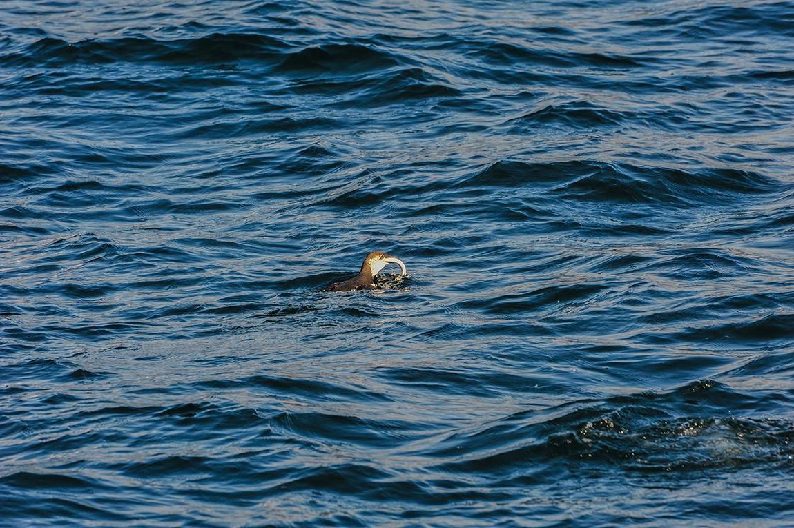 Океански улов