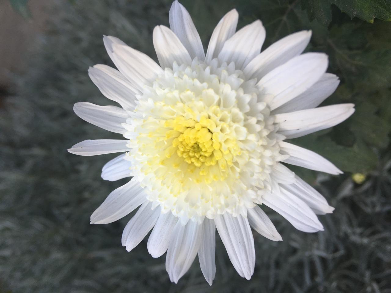 Красиво цвете