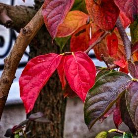 Есенно клонче от райска ябълка