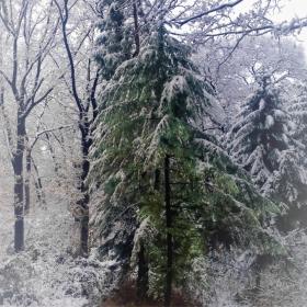 В лесу родилась елочка.в лесу она росла....